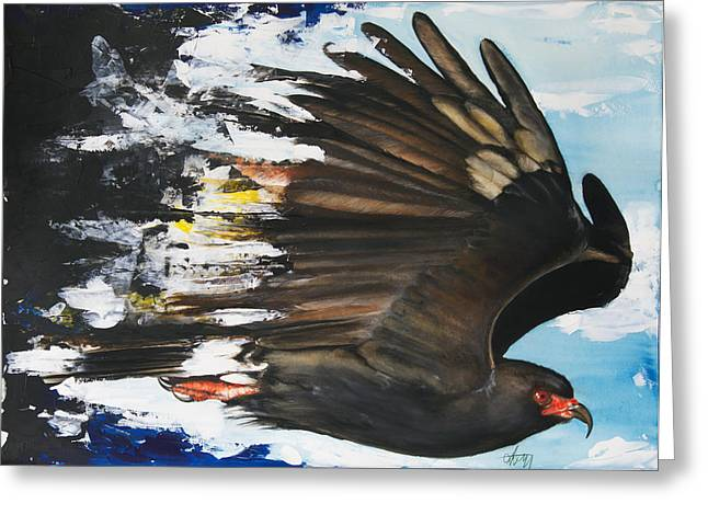 Everglades Snail Kite Greeting Card by Anthony Burks Sr