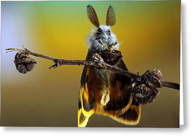 Moth Greeting Cards - ~/ Greeting Card by Eyal Bussiba
