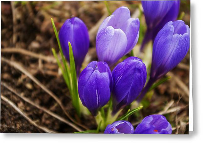 Spring Bulbs Greeting Cards -  Flower in a Natural Setting Greeting Card by Adriana Marteva