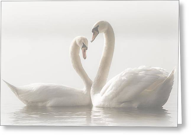 Swans... Greeting Cards - ... Forever... Greeting Card by Monika Schwager