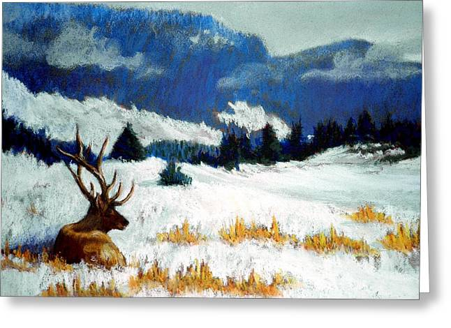 High Country Elk Greeting Card by Curt Peifley