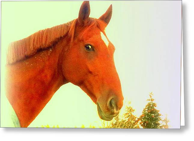 When A Horse Tries To Tell You Something You Should Listen  Greeting Card by Hilde Widerberg