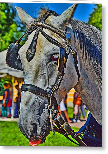 Veterinary Digital Greeting Cards -  Horse language. Greeting Card by Andy Za