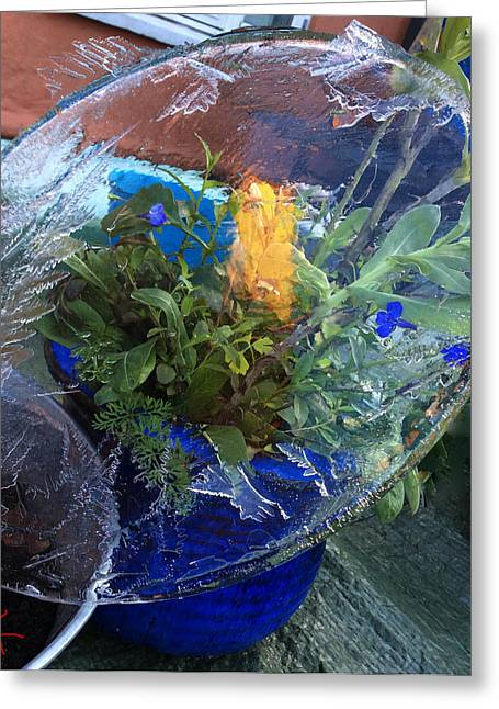 Experiment Greeting Cards -  Ice Water Experiment  Greeting Card by Colette V Hera  Guggenheim