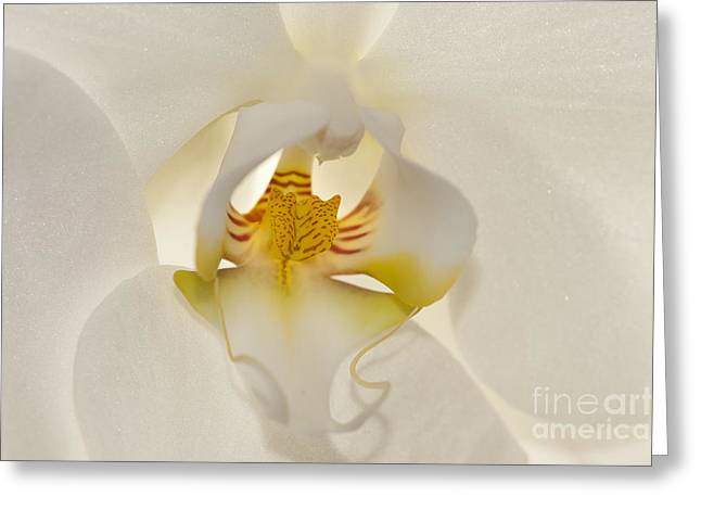 Macro Micro Greeting Cards -  In the Heart of the Orchid Greeting Card by Sandra Bronstein