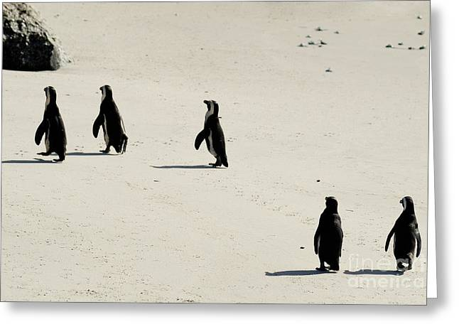 Cape Town Greeting Cards -  Jackass Penguins walking on beach Greeting Card by Sami Sarkis