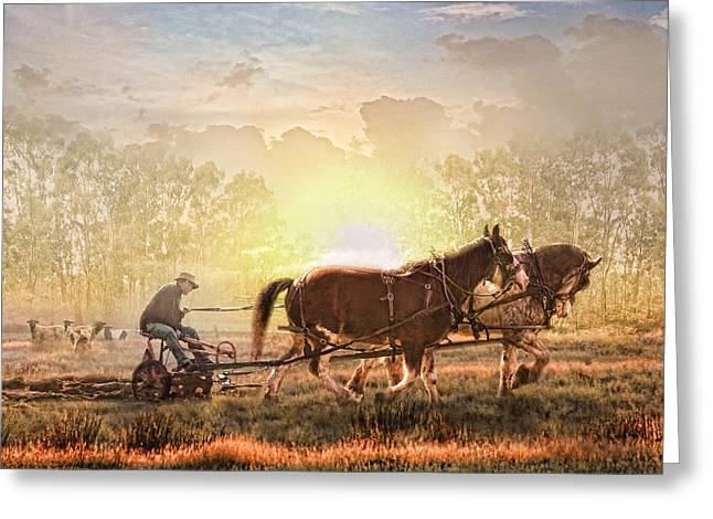 Clydesdale Greeting Cards -  Life In The Sun Greeting Card by Trudi Simmonds
