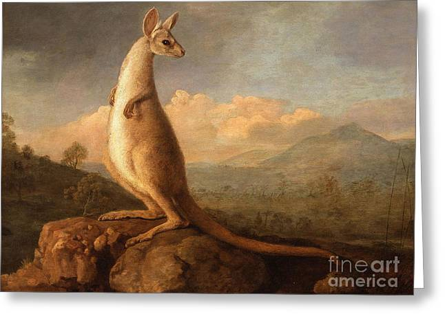 Long Tail Forest Greeting Card by George Stubbs