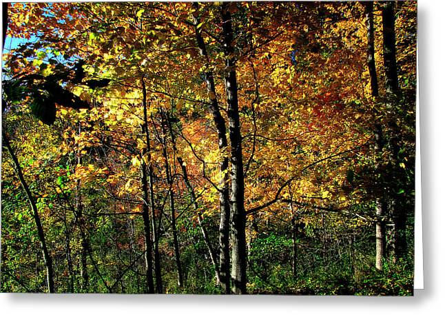 Michigan Fall Colors 2  Greeting Card by Scott Hovind