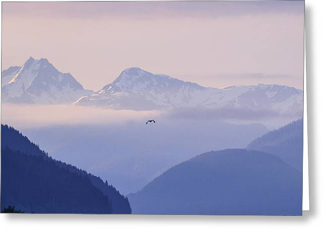 Sea Lions Greeting Cards -  Morning Cloudness at Taku Inlet Juneau Greeting Card by Allan Levin