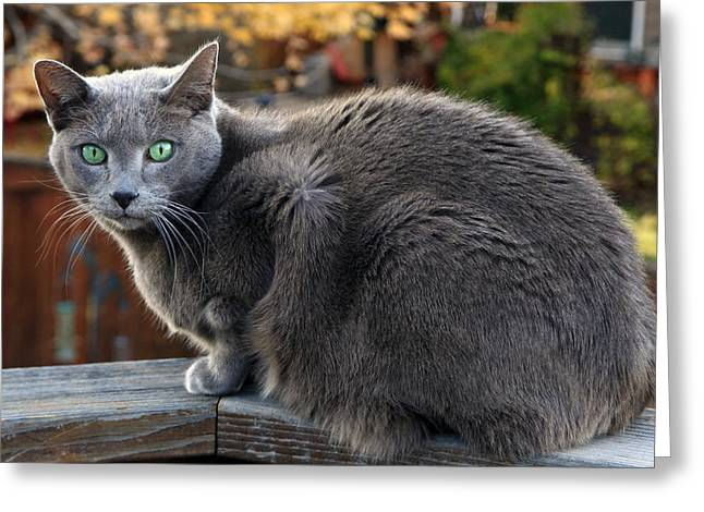 Cat Photographs Greeting Cards -  My Pal Clyde Greeting Card by James Steele