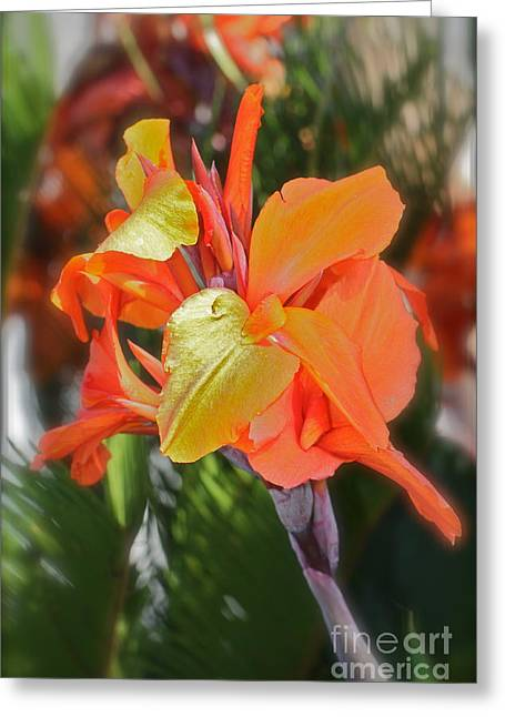 Orange Bright Greeting Card by Maureen J Haldeman