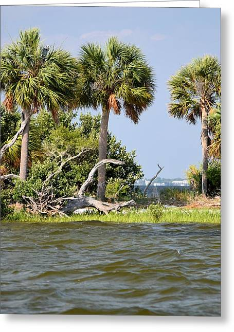 Cedar Key Greeting Cards -  Peer Through Atsena Otie Key Greeting Card by Sheri McLeroy