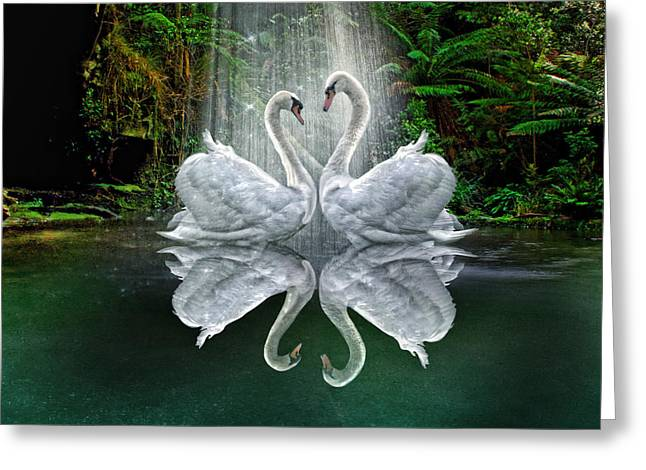 Mute Swan Greeting Cards -  Pure Greeting Card by Trudi Simmonds