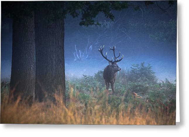 Rut Greeting Cards -  Richmond Park Stag Greeting Card by Ian Hufton