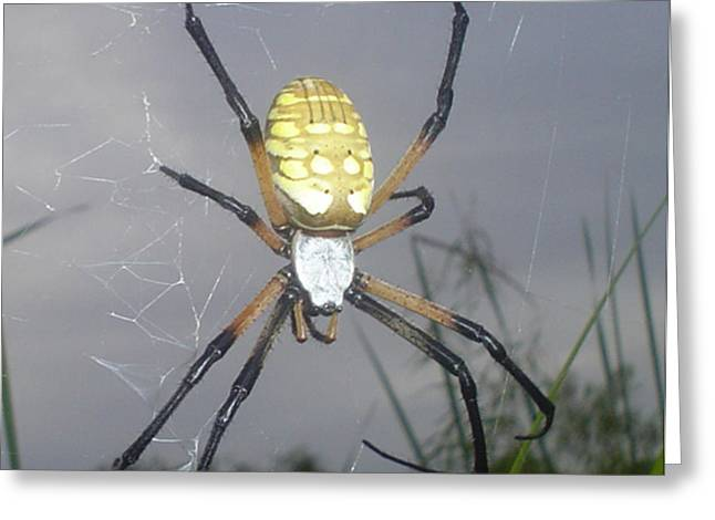 Gardens Pastels Greeting Cards -  Texas Garden spider Greeting Card by Evelyn Patrick