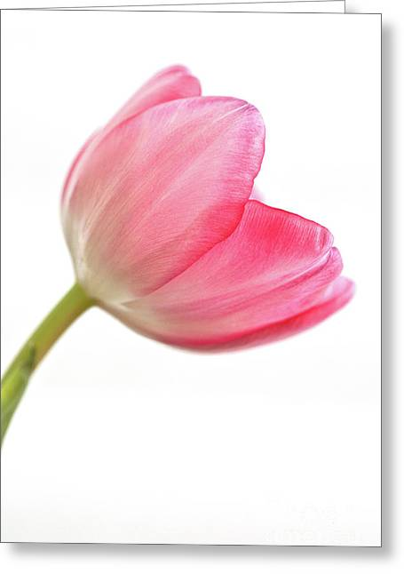 Acropolis Greeting Cards -  Tulip Acropolis Greeting Card by John Edwards