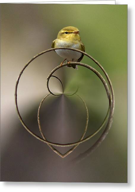 Wood Warbler Greeting Card by Jouko Lehto
