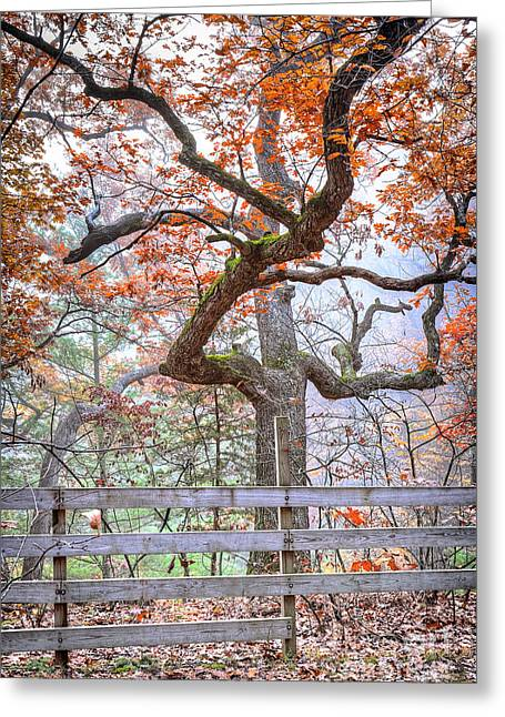 Starved Rock Park Greeting Cards - 0981 Fall Colors at Starved Rock State Park Greeting Card by Steve Sturgill