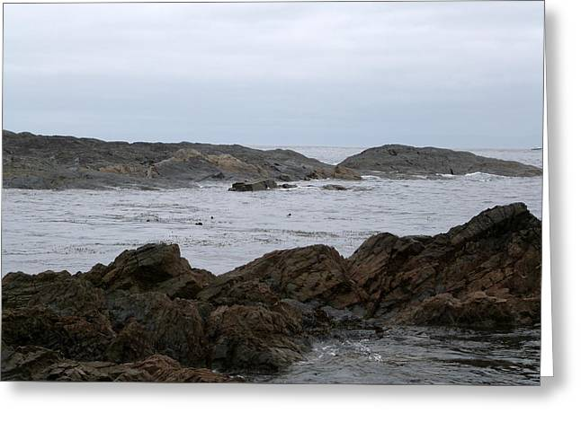 Port Renfrew Greeting Cards - 22-05-15 Greeting Card by Darrell MacIver