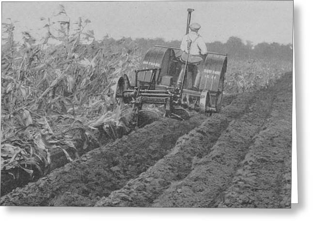 Harvest Photographs Greeting Cards - A Farmer Driving A Tractor Greeting Card by American School