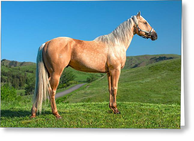 A Horse Named Shaker Greeting Card by Todd Klassy