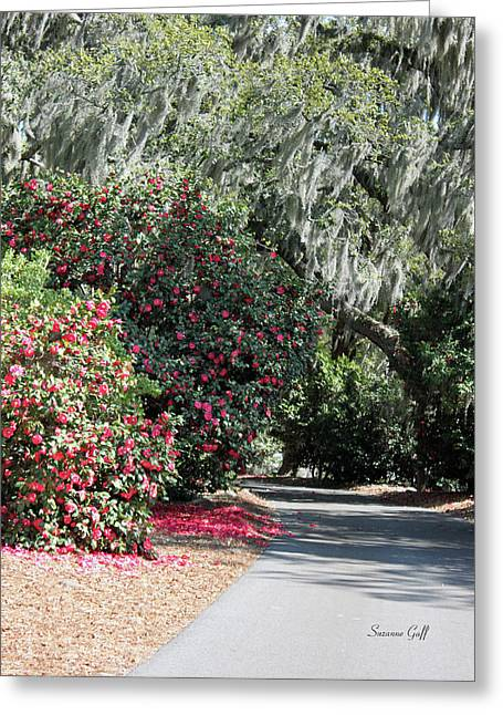 Tree Art Giclee Greeting Cards - A Lowcountry Springtime Greeting Card by Suzanne Gaff
