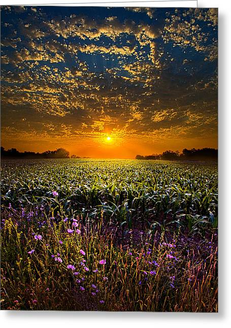 Myhorizonart Greeting Cards - A New Day Greeting Card by Phil Koch