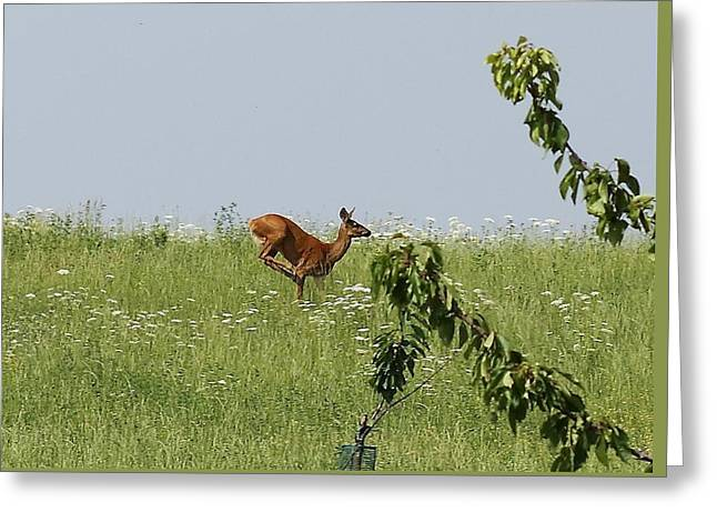 Meadow Greeting Cards - A roe deer Greeting Card by Samantha Mattiello