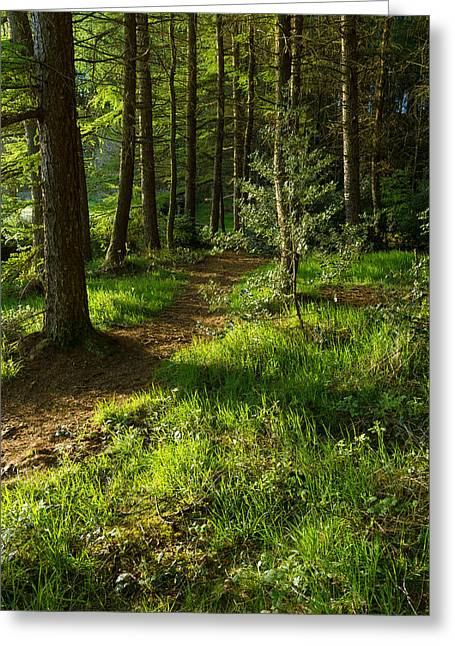 Fantasy World Greeting Cards - A Walk Through The Forest. Greeting Card by Daniel Kay