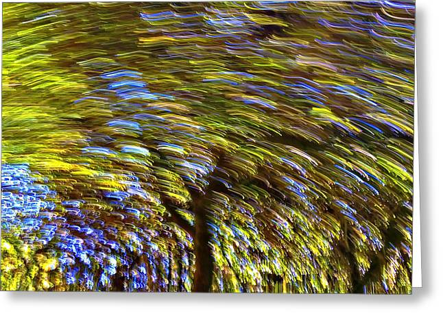 Photographs Greeting Cards - Abstract Trees Greeting Card by Susan Leggett