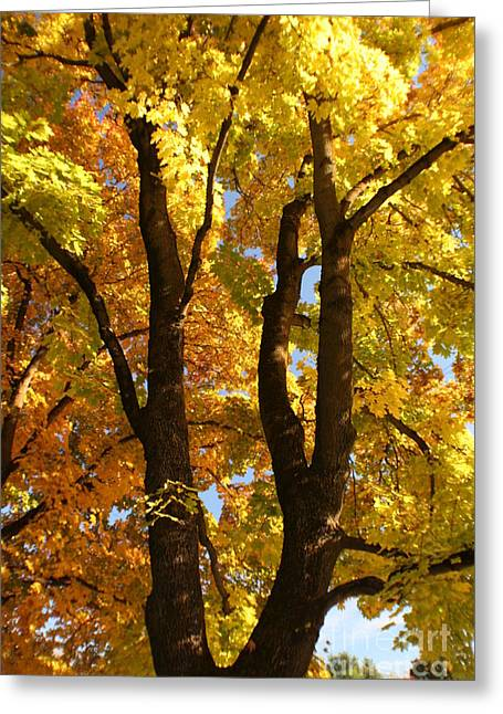 Achieve Greeting Cards - Achievement Greeting Card by Idaho Scenic Images Linda Lantzy