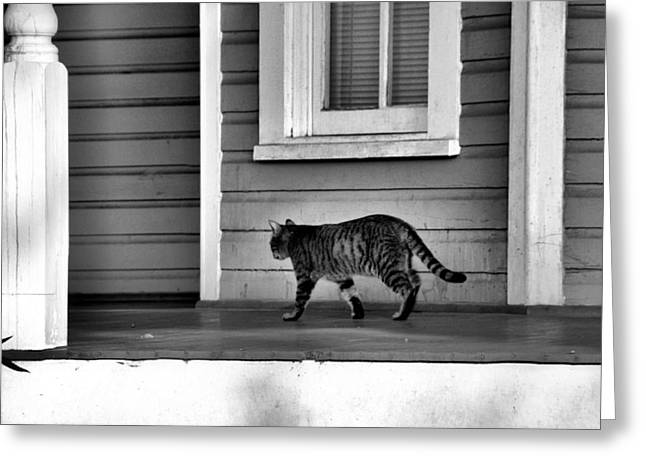 Across The Porch Greeting Card by Jan Amiss Photography