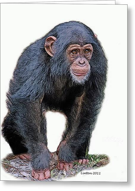 Chimpanzee Digital Greeting Cards - African Chimpanzee Greeting Card by Larry Linton