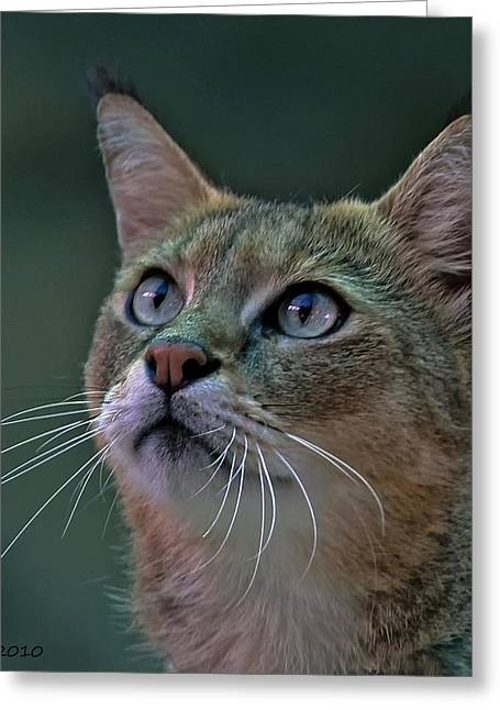 African Wild Cat Greeting Card by Larry Linton