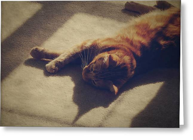 Cat Greeting Cards - Afternoon Nap Greeting Card by Amy Tyler