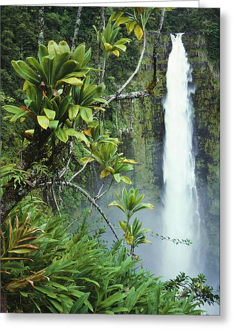 Mountainside Art Greeting Cards - Akaka Falls Greeting Card by Ron Dahlquist - Printscapes