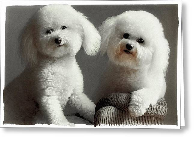 Happy Dogs Cute Dogs Greeting Cards - All Smiles Greeting Card by Lynn Andrews