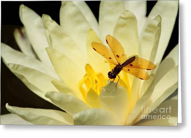 Amber Dragonfly Dancer 2 Greeting Card by Sabrina L Ryan
