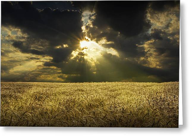 Harvest Art Greeting Cards - Amber Waves of Grain Greeting Card by Randall Nyhof
