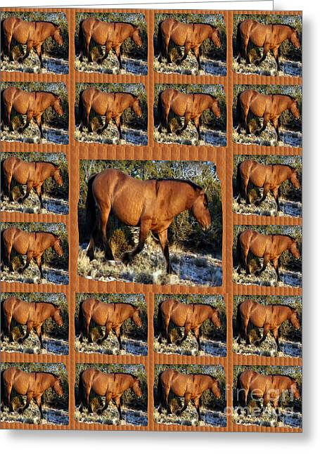 American Wild Horse Mustang On Posters Canvas Pillows Curtains Duvetcovers Phone Cases Tshirts Jerse Greeting Card by Navin Joshi