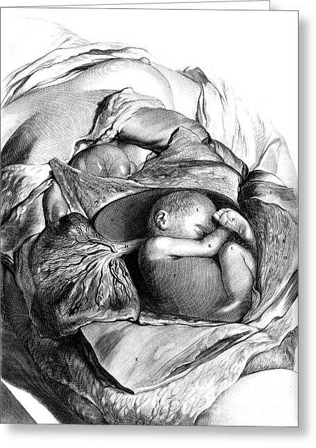 Naturalistic Greeting Cards - Anatomia Humani Corporis, Table 56, 1690 Greeting Card by Science Source