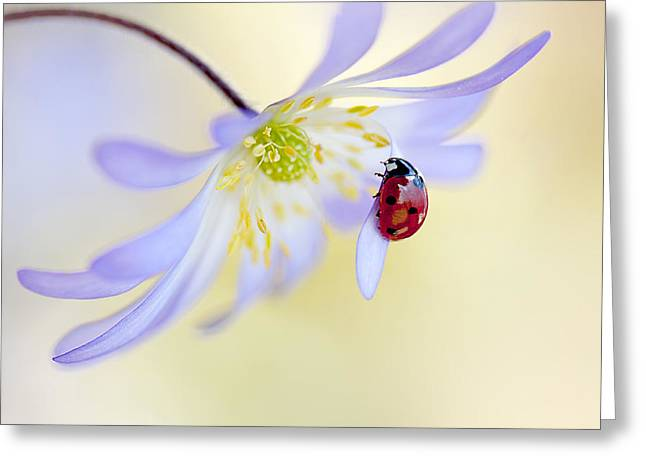 Ladybugs Greeting Cards - Anemone Lady Greeting Card by Jacky Parker