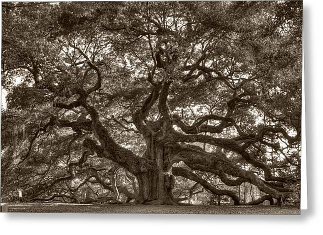 Angel Greeting Cards Greeting Cards - Angel Oak Live Oak Tree Greeting Card by Dustin K Ryan