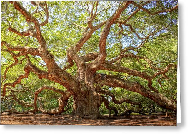 Old South Greeting Cards - Angel Oak Tree Greeting Card by Drew Castelhano