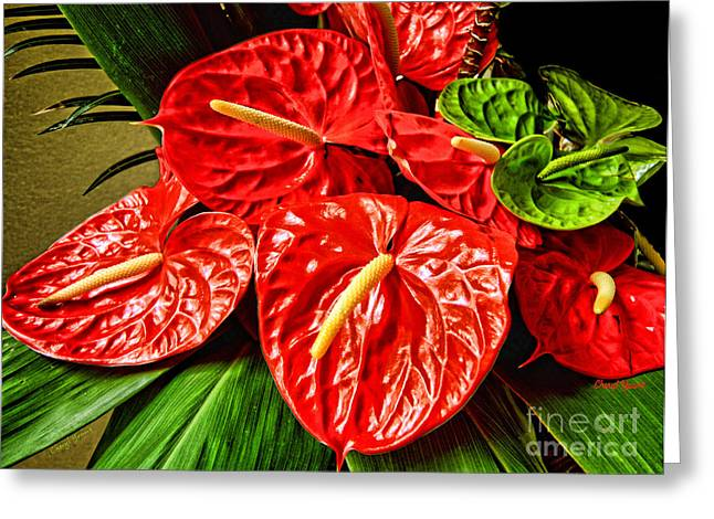 Reception Room Greeting Cards - Anthurium  Greeting Card by Cheryl Young