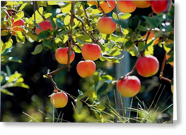 Branch Greeting Cards - Apples on apple tree branch Greeting Card by Lanjee Chee