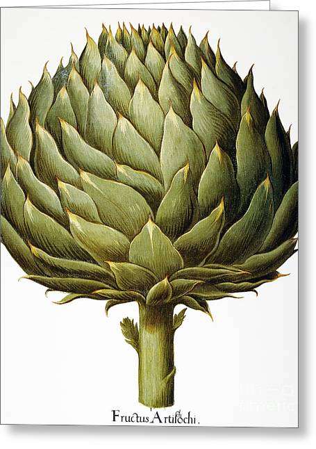 Artichoke, 1613 Greeting Card by Granger