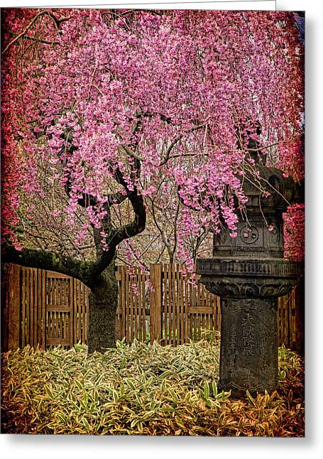 Weeping Greeting Cards - Asian Spring Greeting Card by Chris Lord
