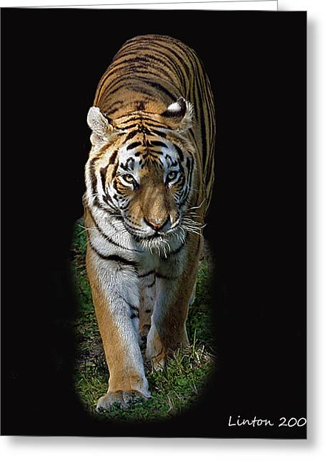 Asian Tiger Greeting Cards - Asian Tiger Greeting Card by Larry Linton